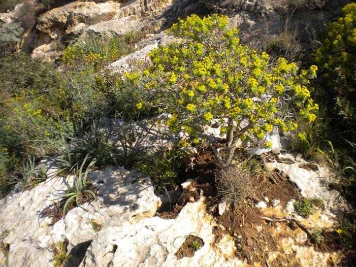 Nelle rocce nascono i fiori.