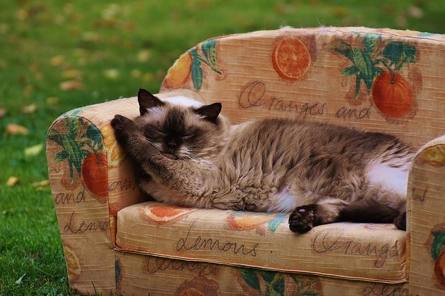 sofa-1631828_640