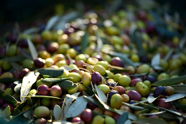 olives-253264_640